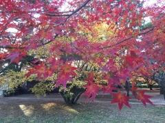 京都大徳寺と御所の秋2018御所1