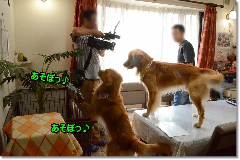 DSC_8598遊ぼうじぇ~