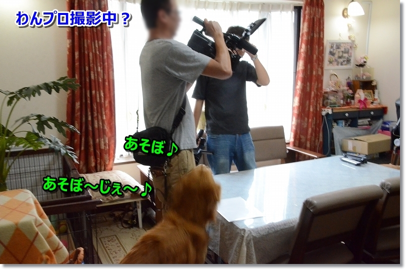 DSC_8603わんプロ撮影中?