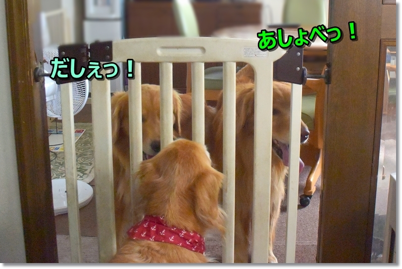 DSC_4013だしぇ~!