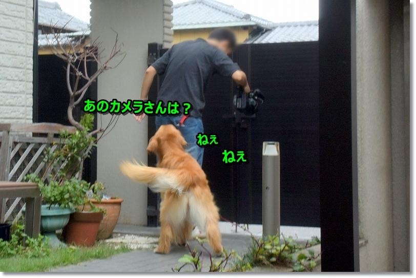 DSC_4042あれ~カメラさんは?
