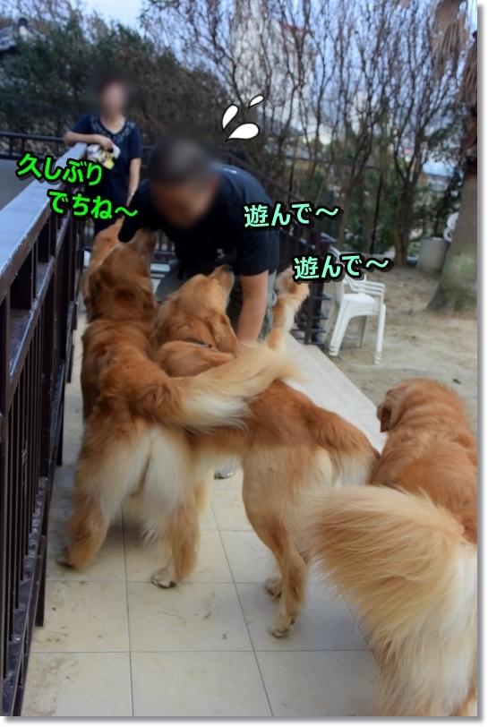 DSC_4109あしょべ~