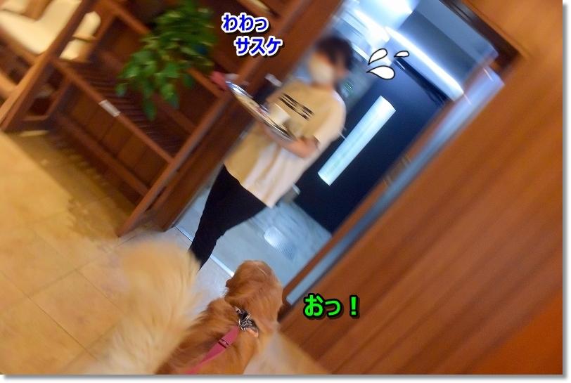 DSC_4170お?