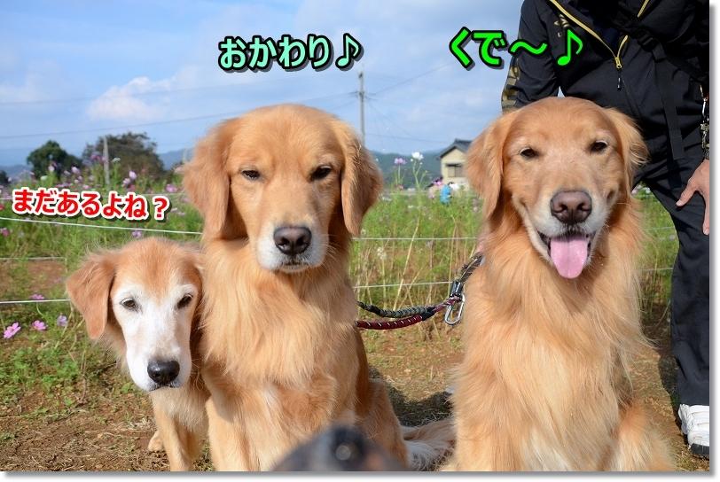 DSC_9284おかわり~ 真剣