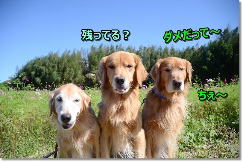 DSC_9312叱られたじぇ・・