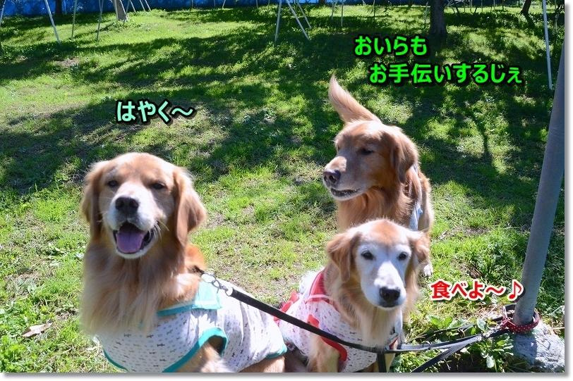 DSC_9440ぼくちんも手伝う!