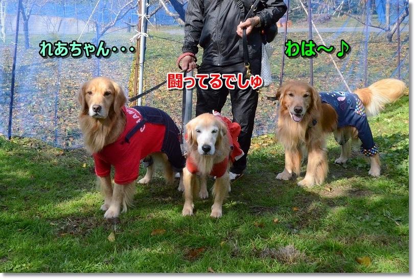 DSC_0944れあちゃん・・・