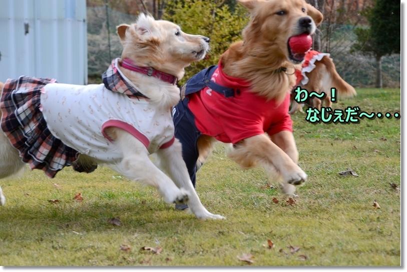 DSC_1055なじぇだ~?