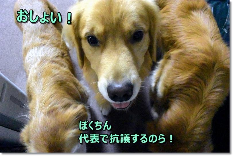 DSC_4320ぼくちん4抗議