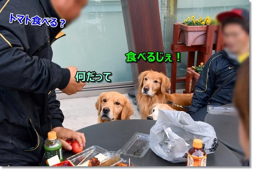 DSC_0186食べる?