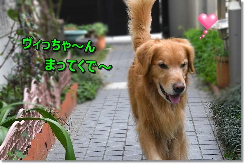 DSC_0241まって~