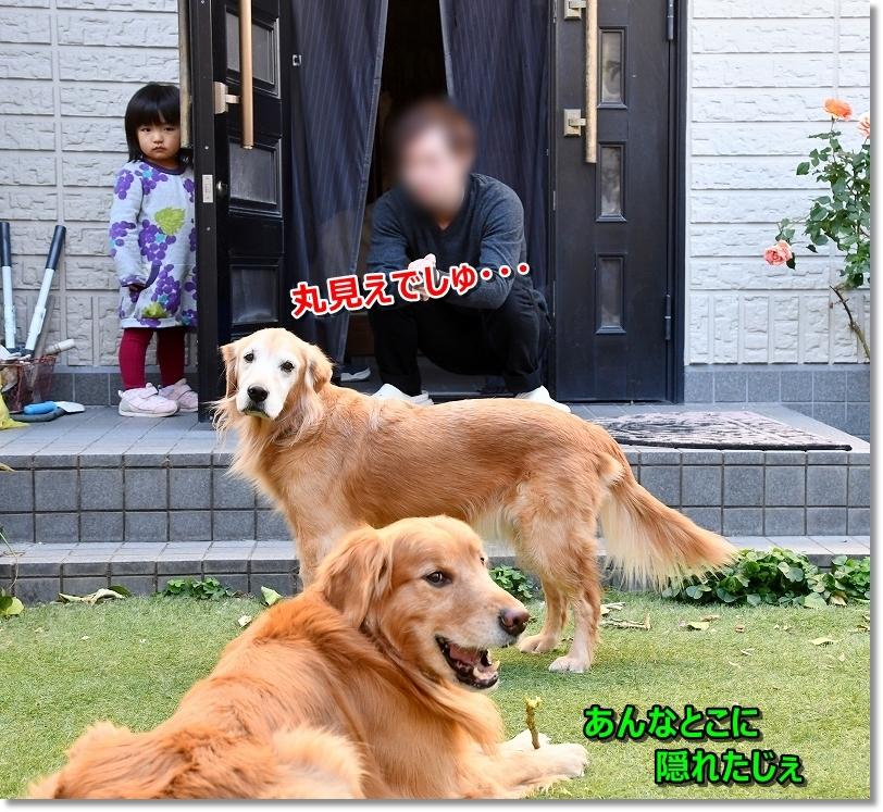 DSC_0050隠れてます