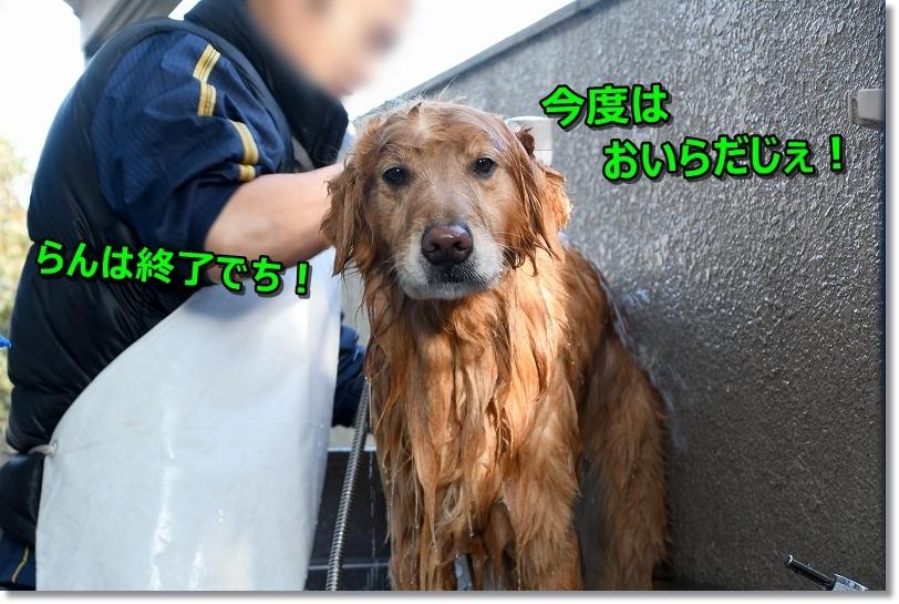 DSC_0601洗ってもらったじゃないでちか。。おいらの番でち!