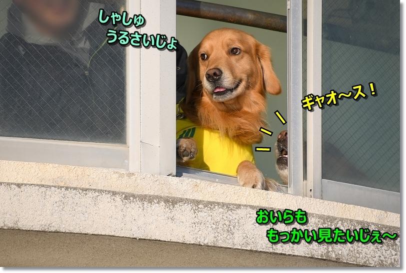 DSC_1124しゃしゅ・・うるしゃい