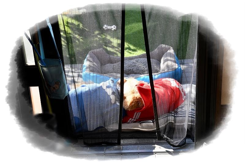 DSC_1543クッションやベッドを干したら