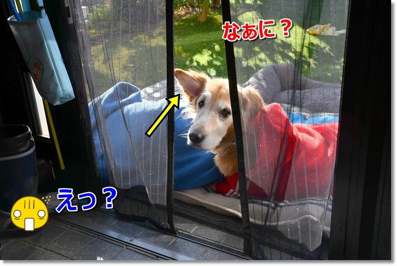 DSC_1544ええ?