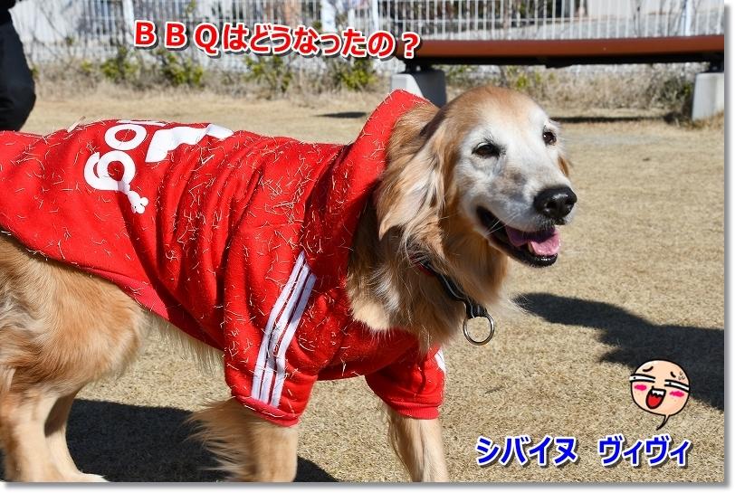 DSC_1287シバ犬