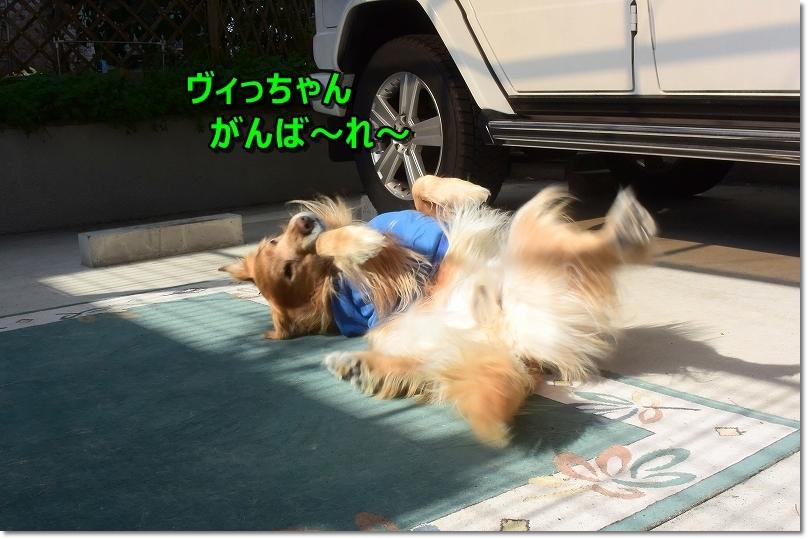 DSC_4831ヴィっちゃんがんばれ~