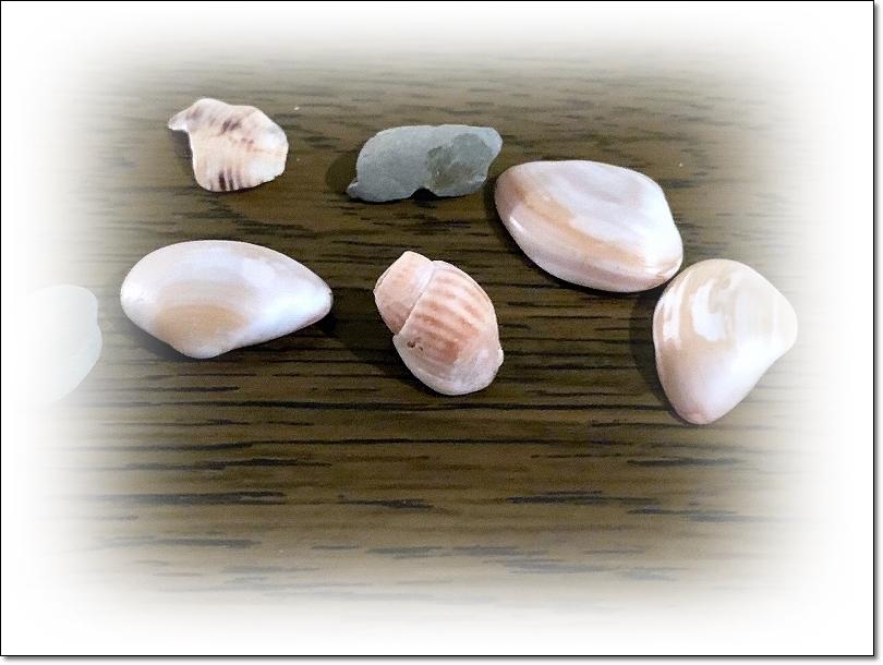 ベッドに転がっていた貝殻と石