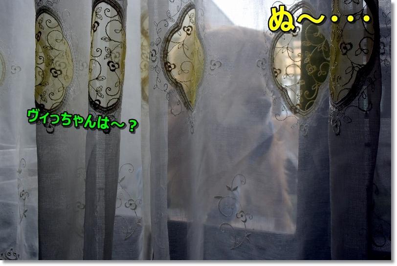 DSC_4893ぼや~