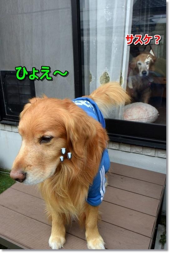DSC_4900ひょえ~