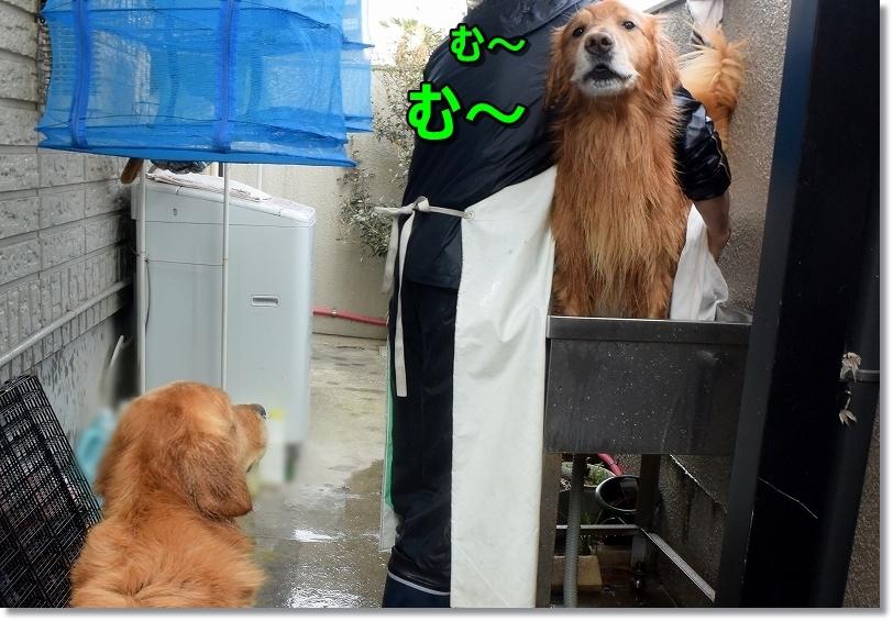 DSC_4981むむ
