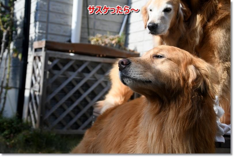 DSC_0692ほえ~