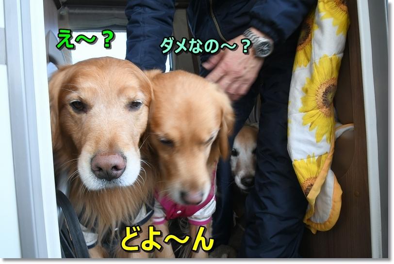 DSC_2044え~?ここ? - コピー