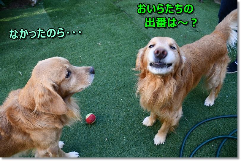 DSC_0034_2018121121010359a.jpg