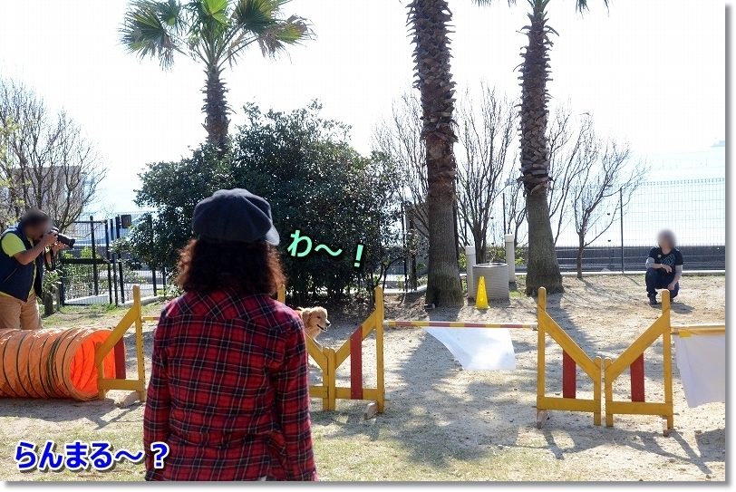 DSC_0143_2018112111591780d.jpg