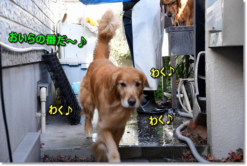 DSC_0589_201901072206563f7.jpg