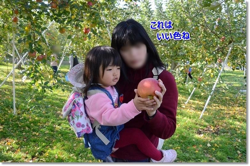 DSC_0824_20181125200646e96.jpg