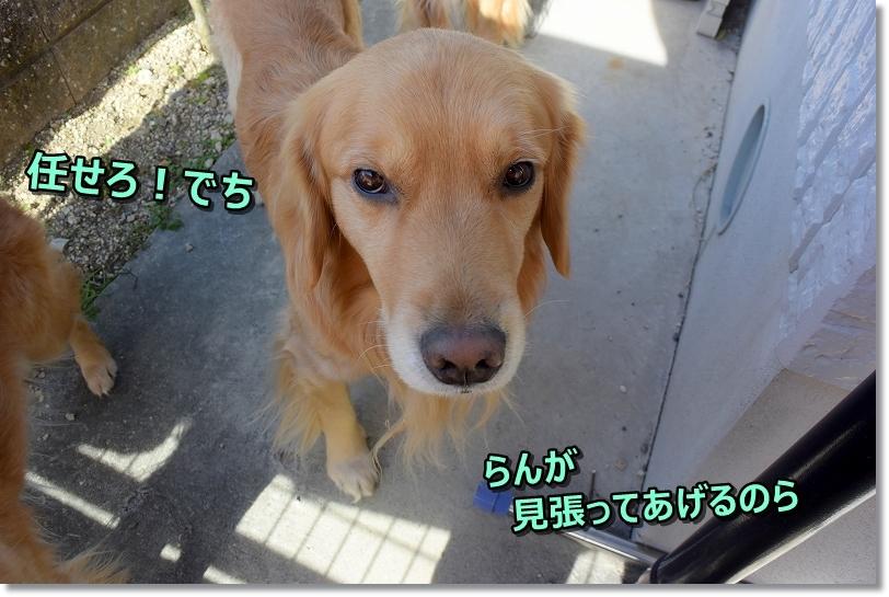 DSC_4787_201901211439364a6.jpg