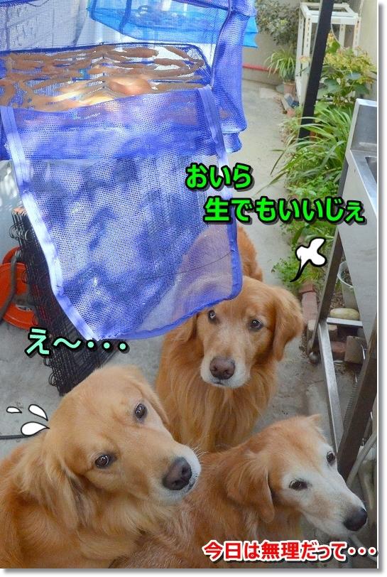 DSC_9298_20181030170009b41.jpg