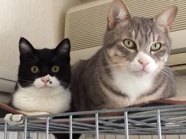 ねむ(左)トト(右)