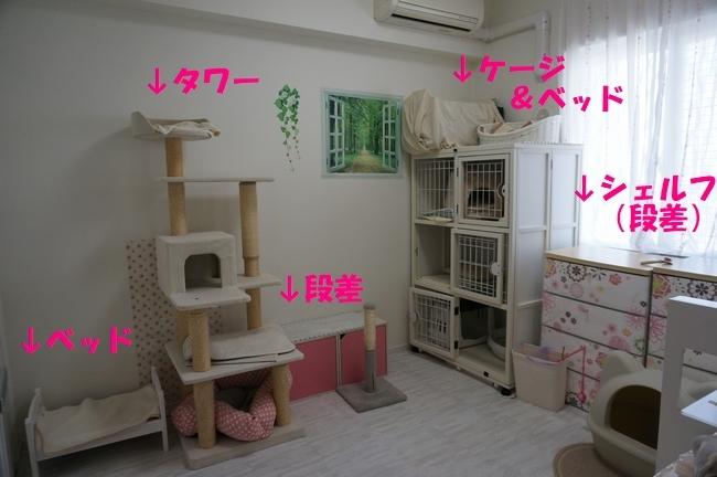 猫の環境1
