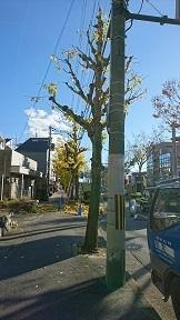 shiradawae_0446.jpg