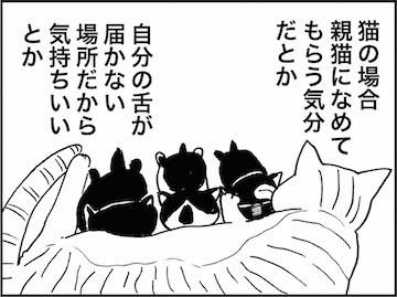 kfc01479-6