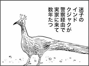 kfc01529-1