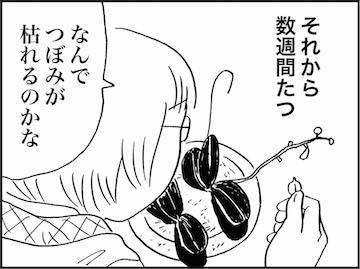 kfcp01539-4