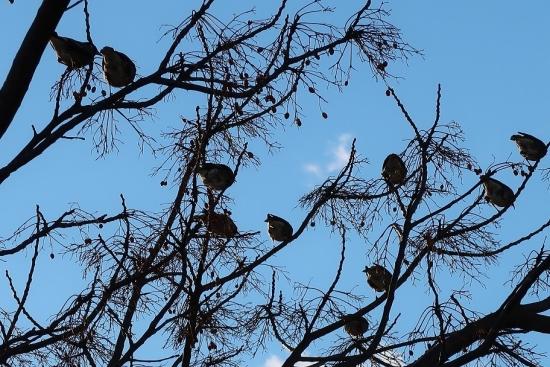 愛知 鳥の木