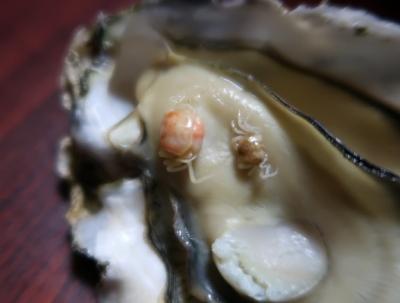 牡蠣にピンノ