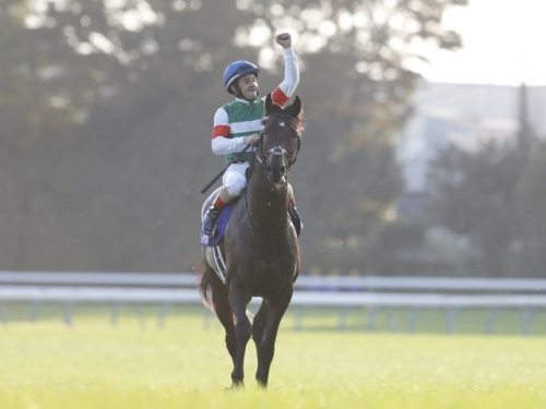 【競馬】藤沢「レイデオロは年内残り1戦。来年も現役」