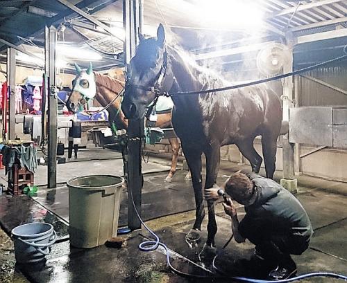 【JBCスプリント】参戦する地方馬で唯一上位人気になりそうなキタサンミカヅキってどうなん?