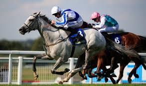 【ジャパンカップ】外国馬はサンダリングブルー1頭のみ 過去最低頭数で確定か