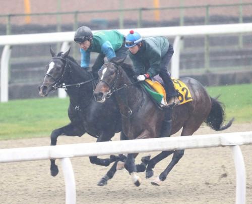 【競馬】シェーングランツ 藤沢「調教師は爺さんだけど馬は若いから(笑)姉より慎重だから終いは伸びる」