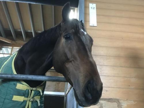 【ホープフルS】助手「サートゥルナーリアが走りすぎて併せ馬の相手がいない」