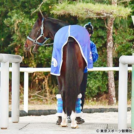 【レース予想】第63回 阪急杯(GIII)