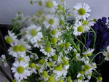 herbthelapy_20181018151026396.jpg