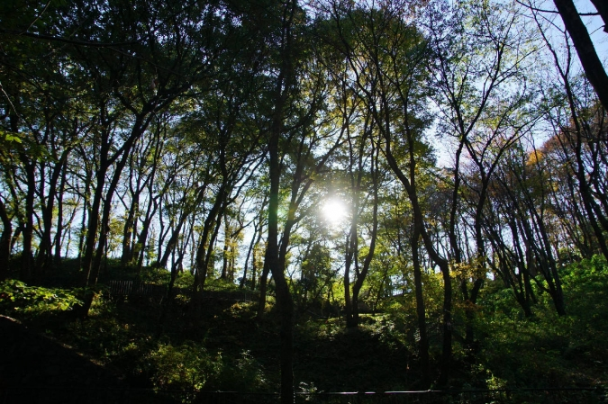 DSC00617東高根森林公園